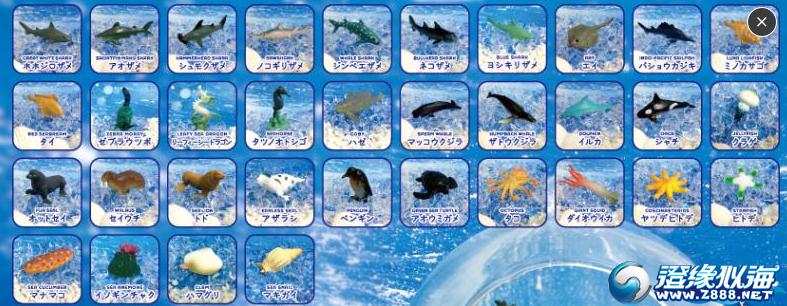海洋动物帮对谢谢