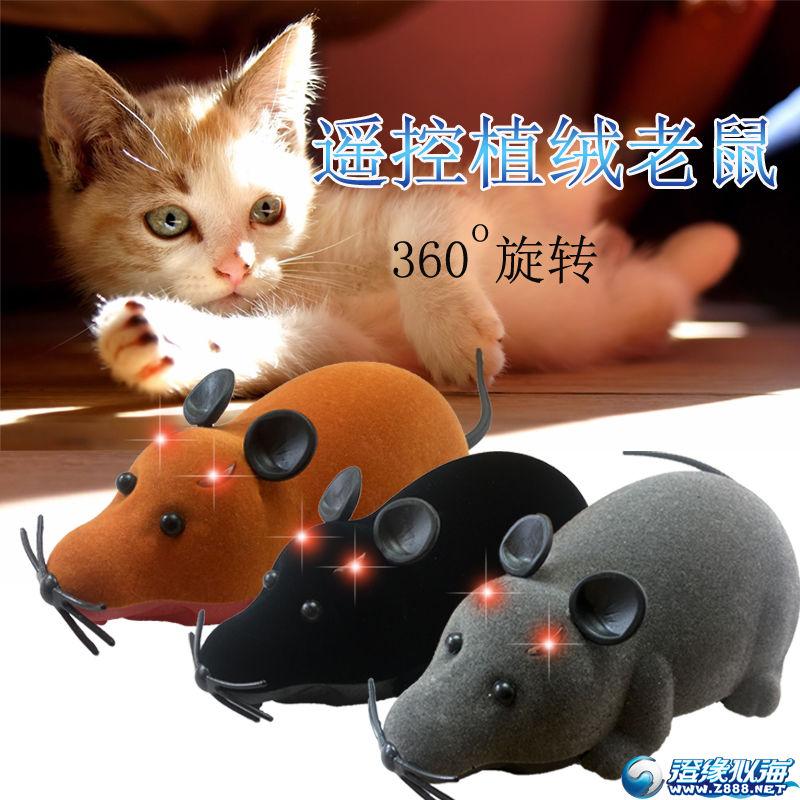 植绒遥控蜘蛛,老鼠